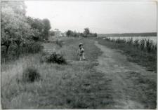 Pies nad brzegiem Zalewu Zemborzyckiego