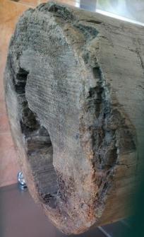 Fragment drewnianej rury wodociągowej z XVI w.