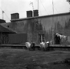 Podwórko na Starym Mieście w Lublinie