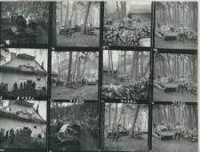 Wglądówka, 1 – 12 Sprzedaż drewna w Dąbrowie