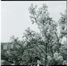 Skan Negatywu, 1 - 5 Kwitnące sady, 6 - 9 Migawki, 10 - 11 Rewaloryzacja Starego Miasta
