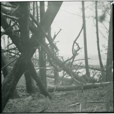 Skan Negatywu, 1 – 12 Grudniowe i styczniowe wichury poczyniły duże straty w drzewostanie nad Zalewem Zemborzyckim